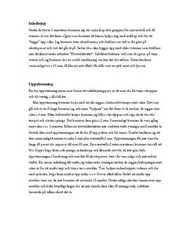 Cirkelträning | Idrottslektion