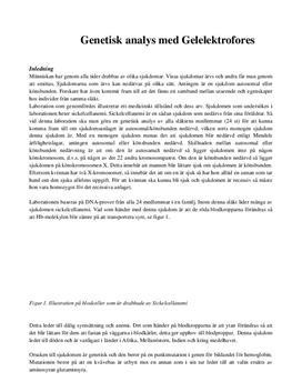 Labbrapport - Biologi: Genetisk analys med gelelektrofores