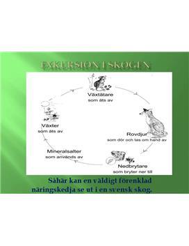 Exkursion i skogen | PowerPoint-presentation