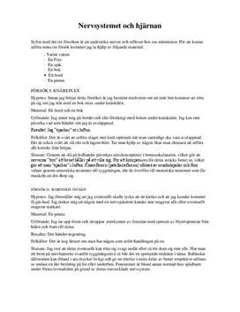 Hjärnan: nervsystem och reflexer | Labbrapport