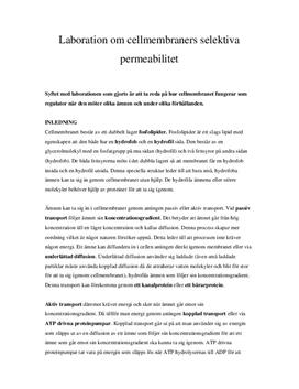 Cellmembranets selektiva permeabilitet | Labbrapport